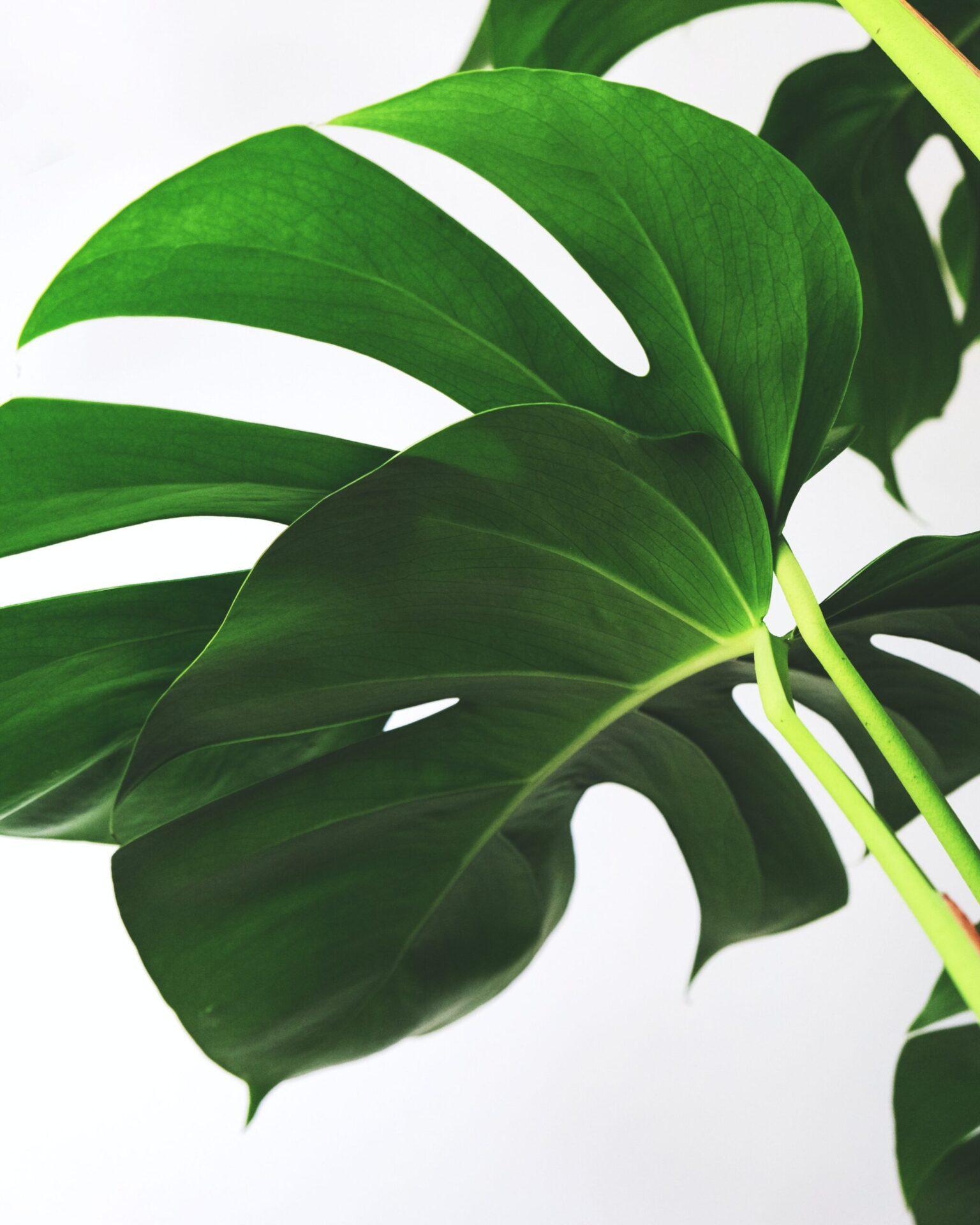 plantas y aire limpio